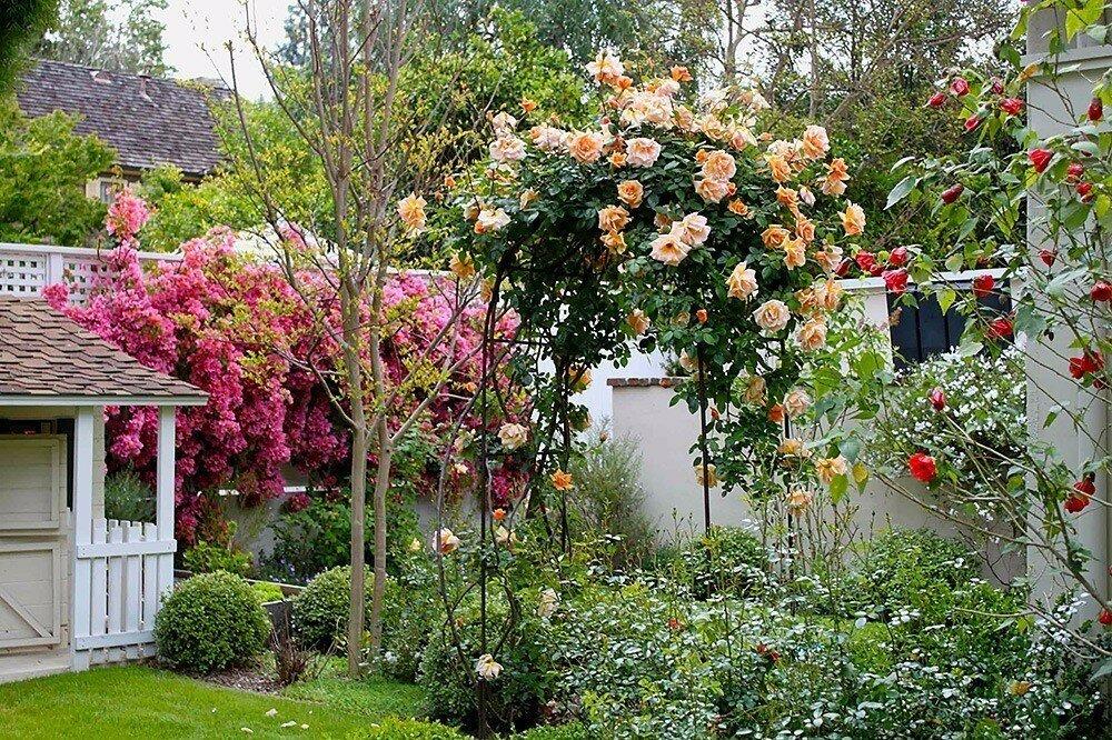 Как сажать розы в открытый грунт летом