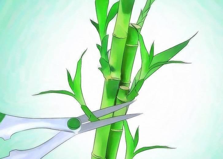 Как растить бамбук в домашних условиях в грунте: правила посадки и ухода