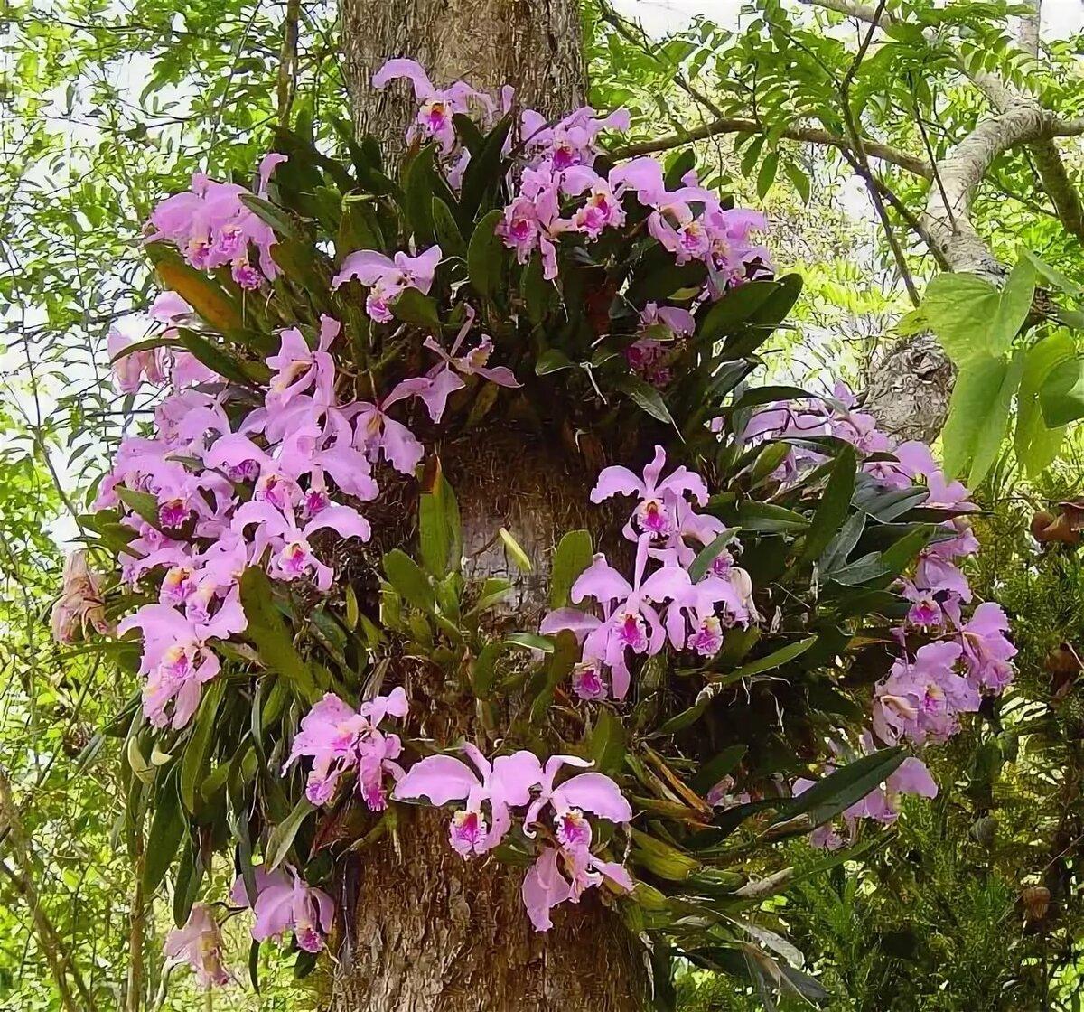 объясняет орхидеи в дикой природе фото это низкокалорийный