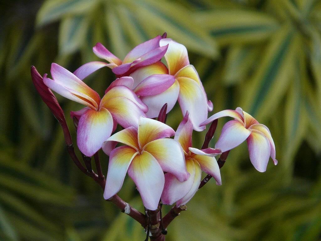 5 самых ярких комнатных растений из тропиков
