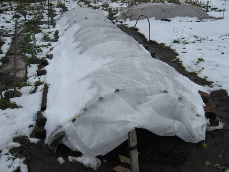 Простые приемы – как подготовить розы к зиме на даче