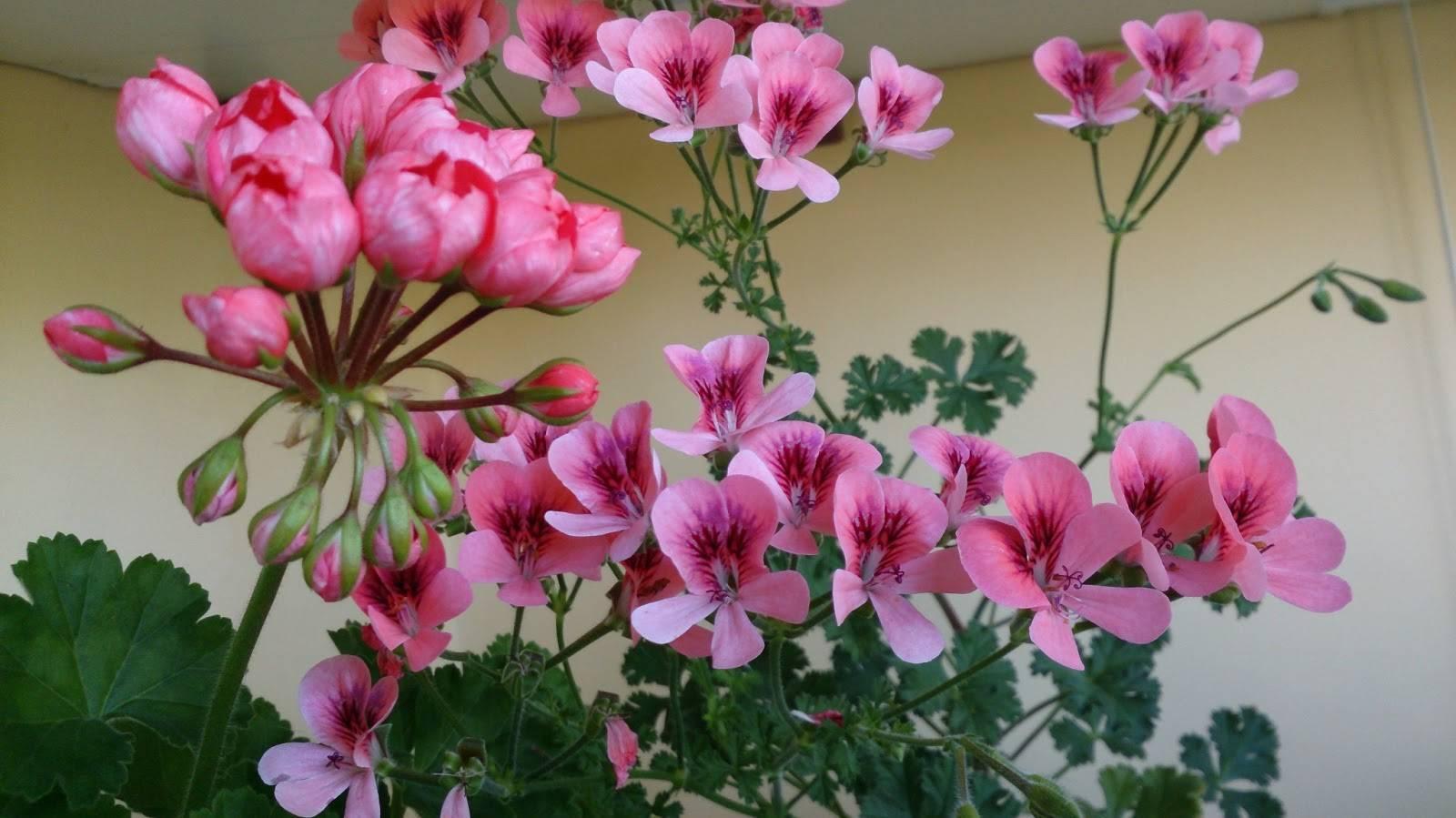 Как ухаживать за тилландсией анита после покупки и во время цветения