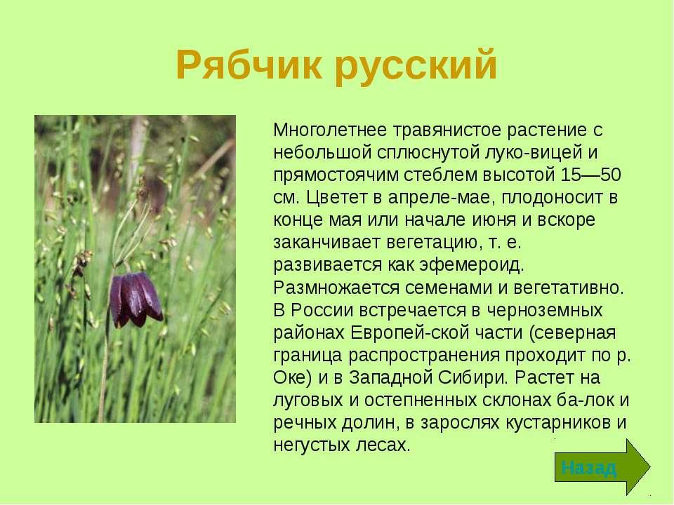 Цветок рябчик: фото и описание разновидностей, как выглядят растения разных видов, полезные свойства, рецепты применения