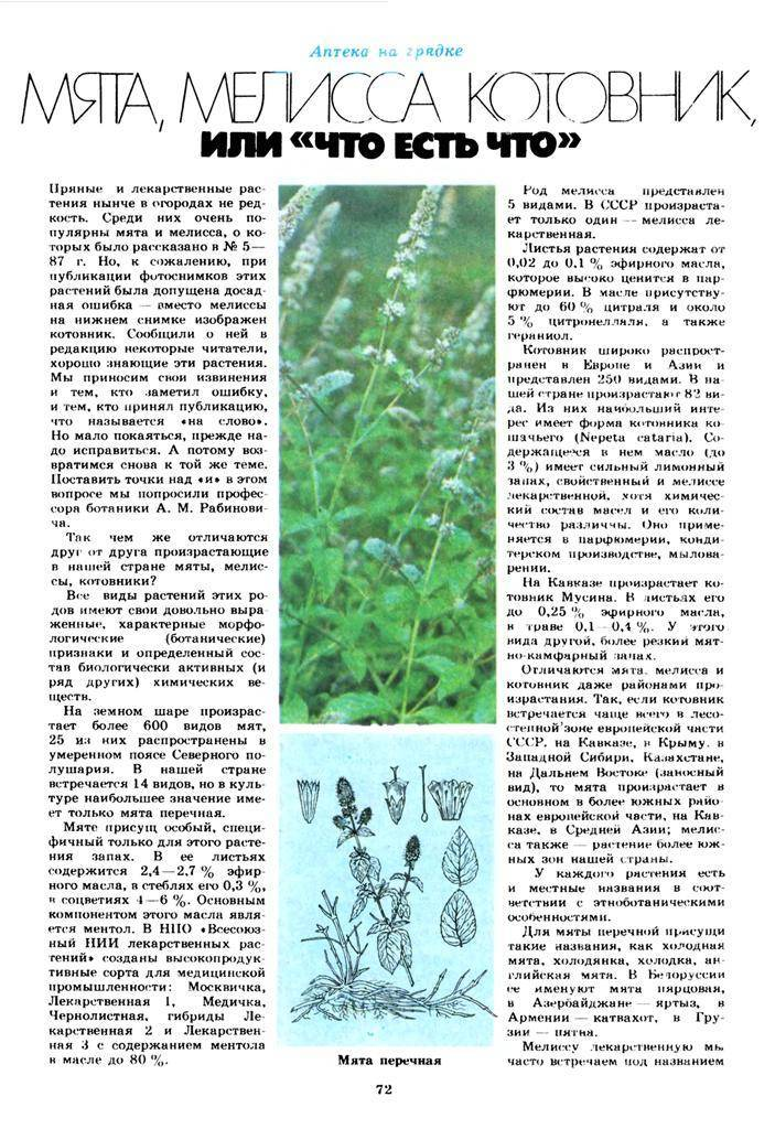 Как вырастить мелиссу лимонную дома и на участке? посадка лекарственной травы и уход за ней