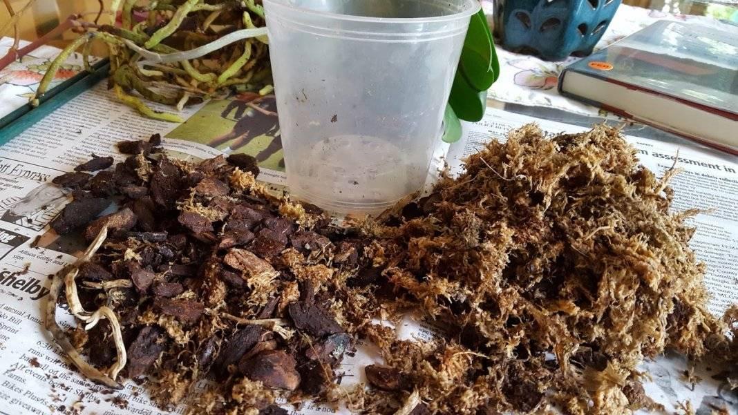 Заботимся об орхидеях. как правильно подобрать состав грунта своими руками?