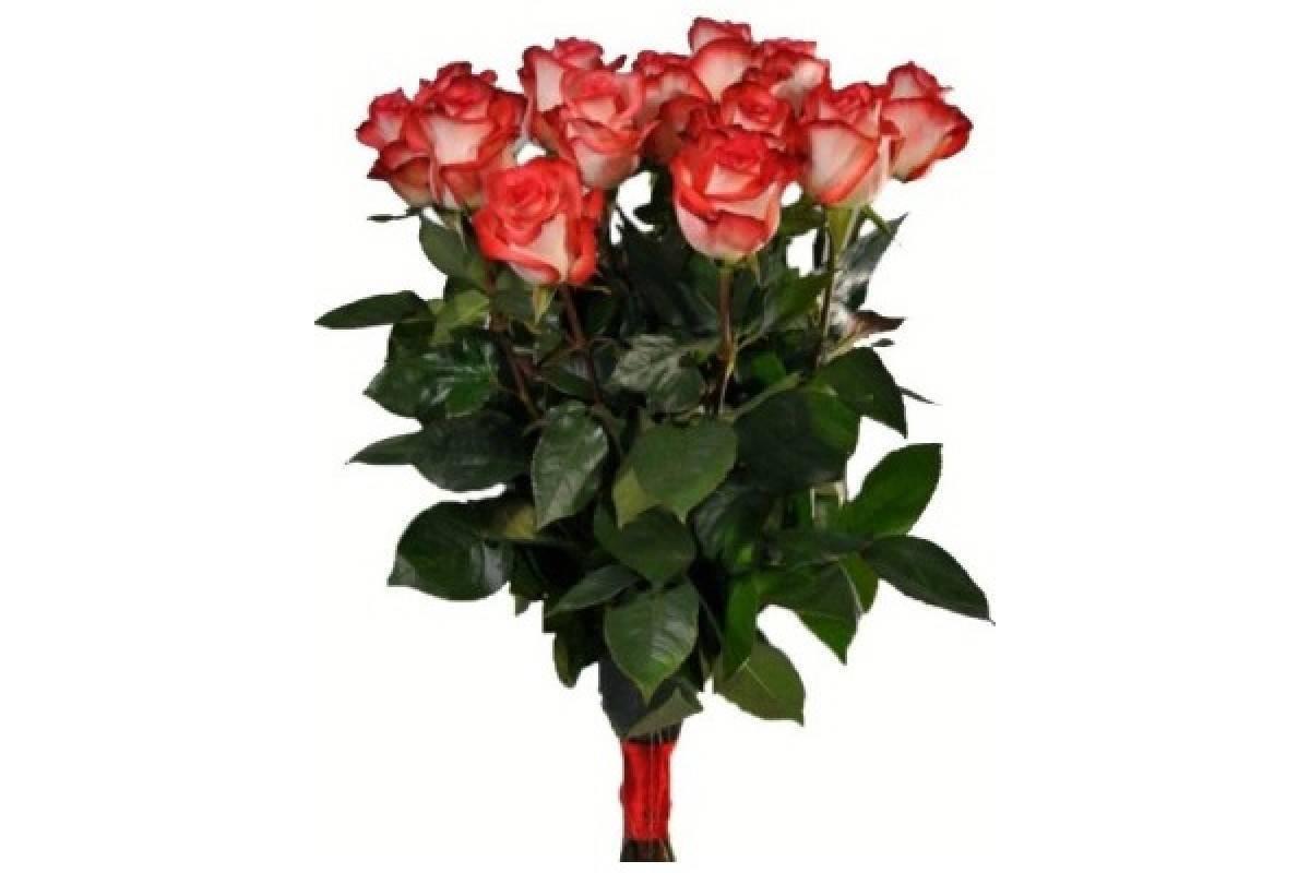 Роза грандифлора: что это такое