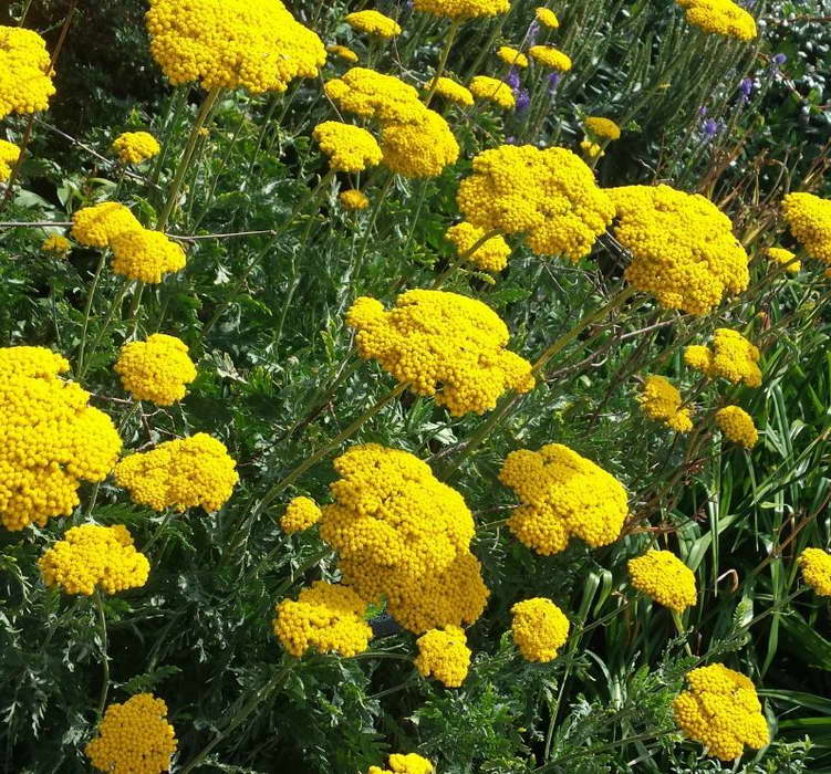 Многолетние растения для сада, их виды и описание