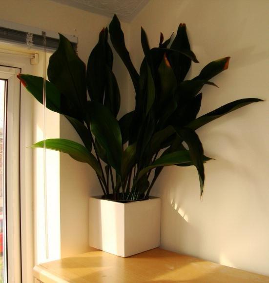 Какие тенелюбивые комнатные растения выбрать для прихожей