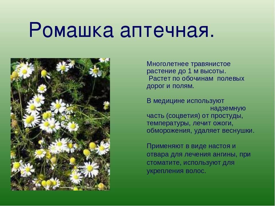 Низкорослые цветы для клумбы на даче, цветущие все лето