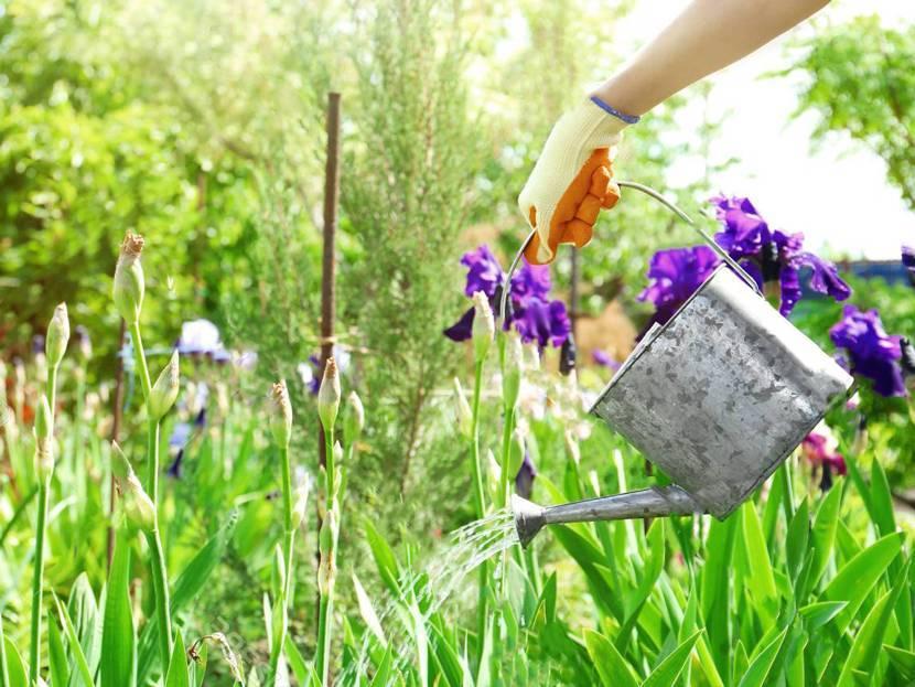 Уход за ирисами после цветения: все правила от а до я!