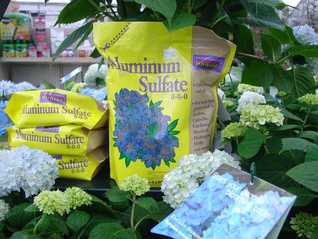 Хлороз гортензии (10 фото): чем лечить? правила обработки листьев железным купоросом. что еще можно сделать?
