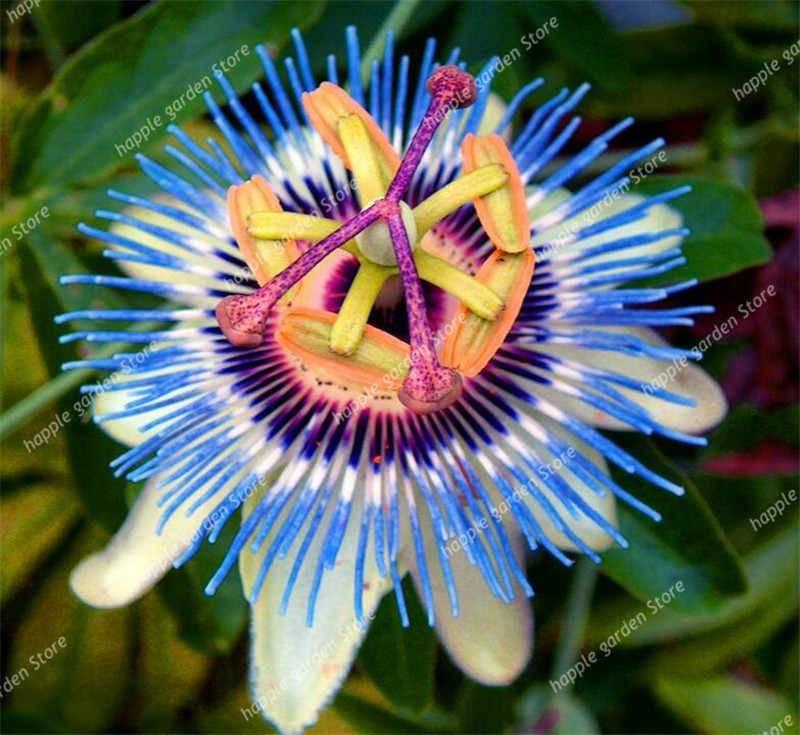 Самые редкие комнатные цветы. растения-экзоты из тропиков