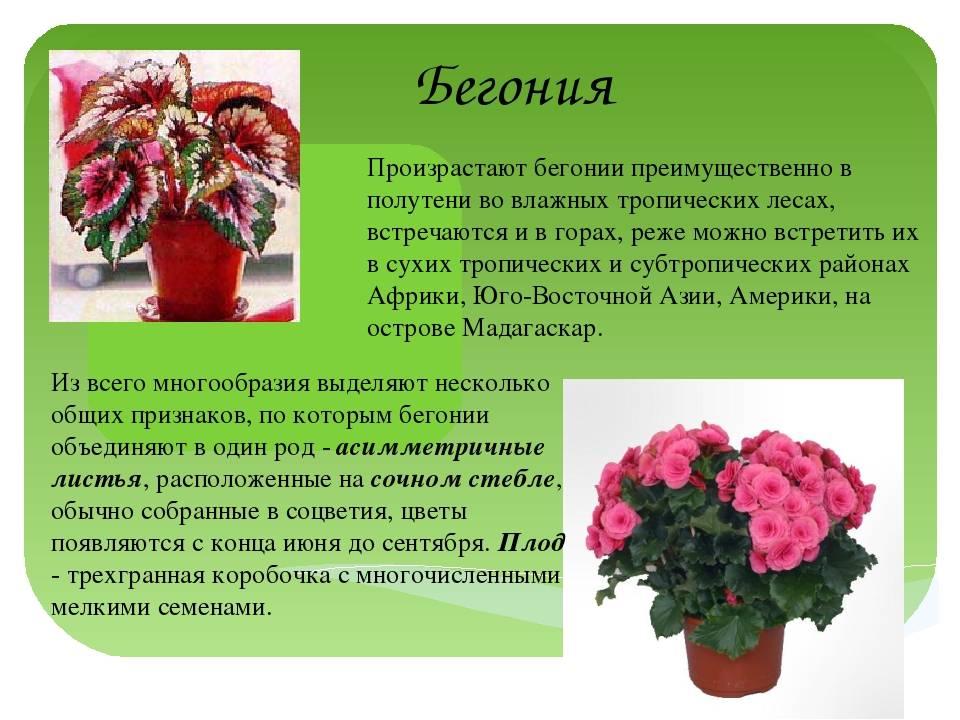 Цветы комнатные с красным цветком - названия и фото