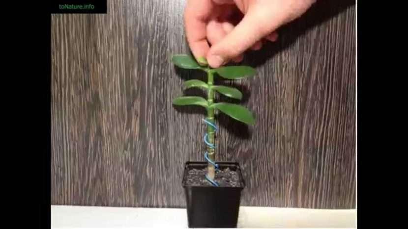 Основные правила прищипывания растений для лучшего роста