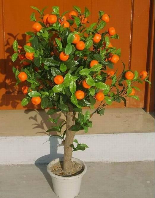 Как посадить и вырастить дерево апельсина из косточки