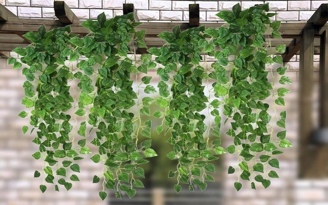 Вьющиеся комнатные растения: цветущие и лиственные