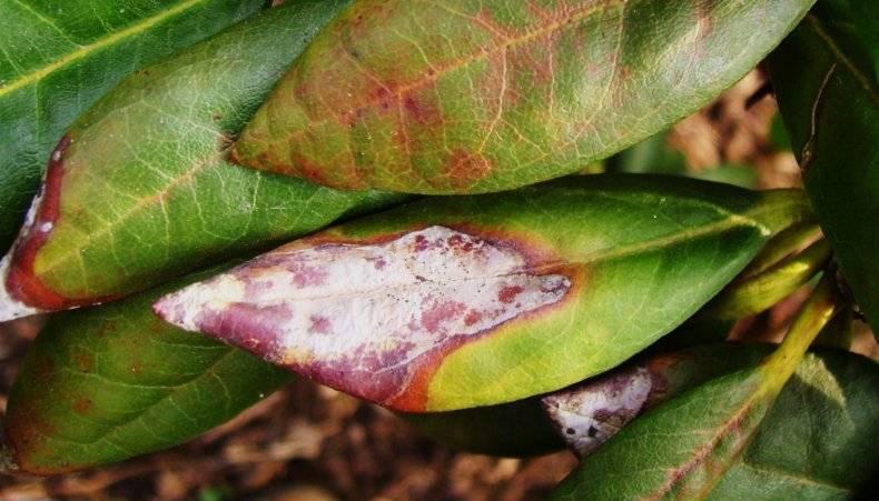 Болезнь фузариоз – лечение и борьба, препараты от заболевания фузариоз