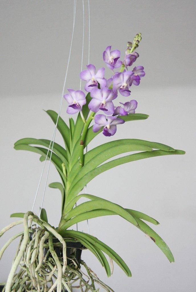 Сорта и виды орхидей: фото, названия, уход, цвета