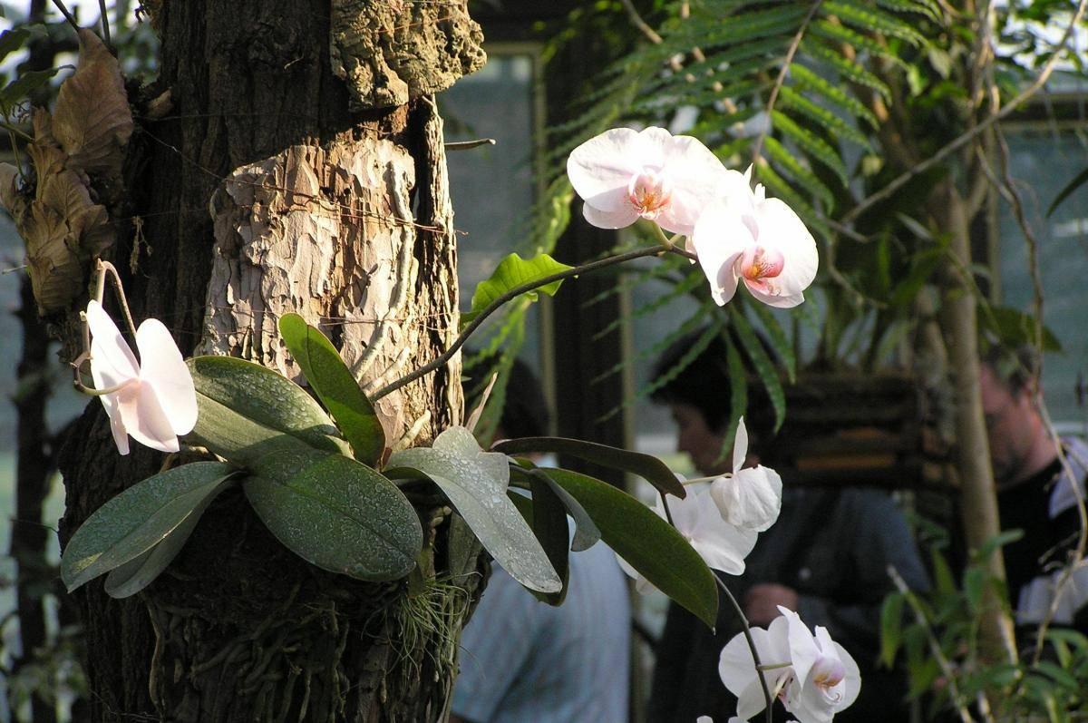 Грунт для орхидеи фаленопсис: какой субстрат нужен и как сделать лучшую почву своими руками, как определить хороший состав, чтоб сажать цветок в домашних условиях?