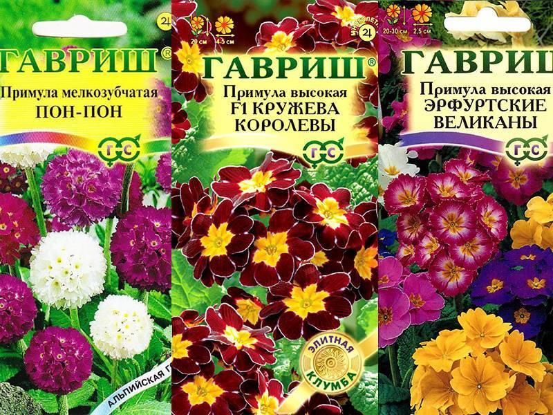 Примула мелкозубчатая (17 фото): выращивание из семян. сорта «альба» и «рубин». посадка и уход