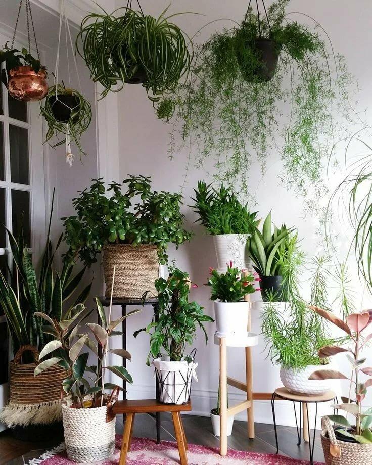 видел фото квартир с растениями представляют собой оборонительные