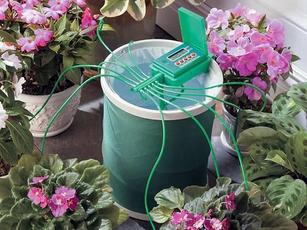 Как правильно поливать цикламен в домашних условиях?