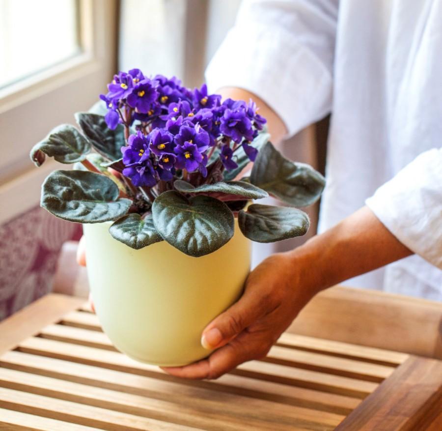 О фиалках свадебный букет морев, выращивание цветка букет невесты