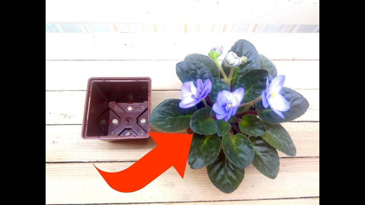 Когда и как пересадить фиалку листом в домашних условиях?