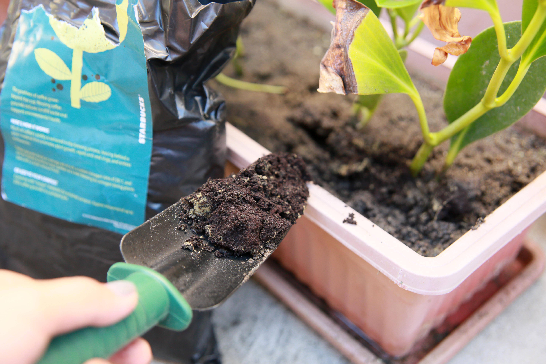 Комнатный цветок фуксия (27 фото): уход и выращивание в домашних условиях. советы для начинающих, размножение и болезни фуксий