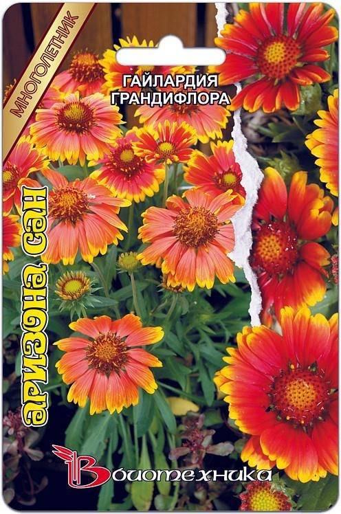 Самое подробное описание гайлардии аризона сан (gailardia hybrida arizona red)