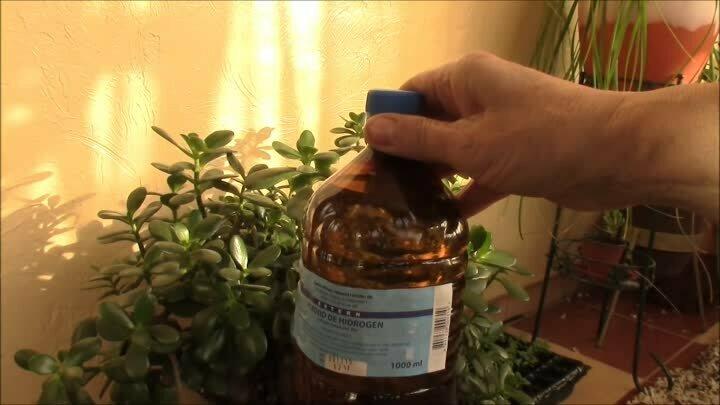 Правила подкормки петуний: чем удобрять для роста, пышного и обильного цветения