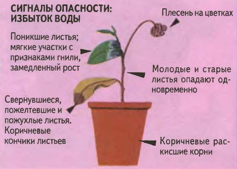 Какая вода подходит для полива комнатных цветов и растений: минеральная и дистиллированная