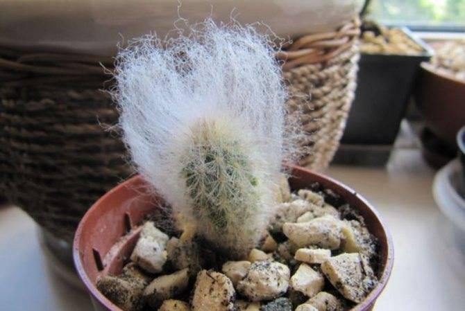 Варианты правильной посадки и выращивания кактуса: примеры из семян и без корней