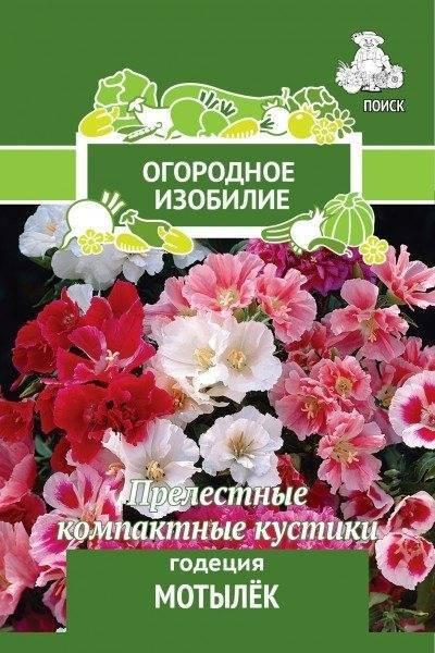 Годеция: общая характеристика и методика выращивания
