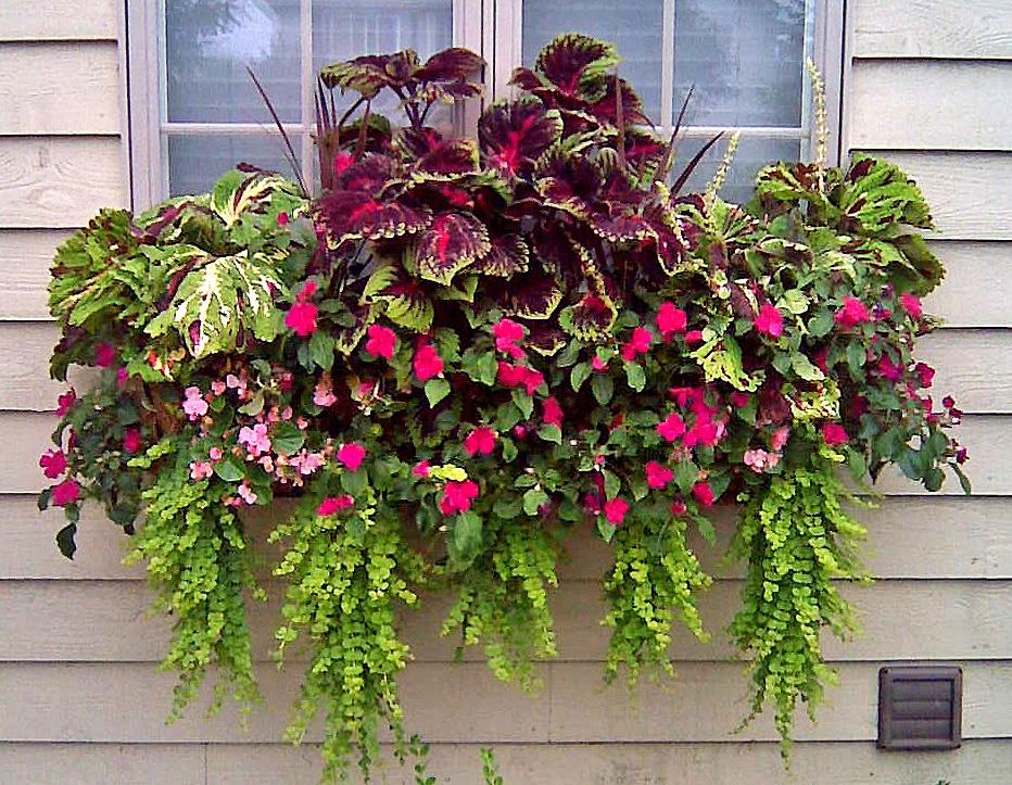 Какие цветы можно посадить в кашпо на улице, даче, чтобы цвели все лето