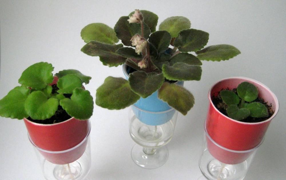 Полив комнатных растений и цветов: как часто и правильно поливать домашние цветы