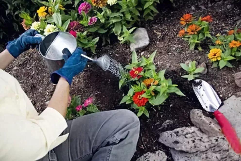 Мускари: выращивание и уход в открытом грунте
