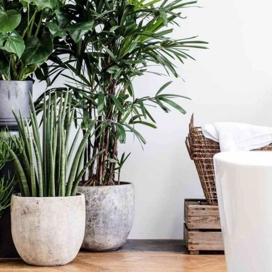 Комнатные цветы для вашей кухни: 20 идеальных вариантов