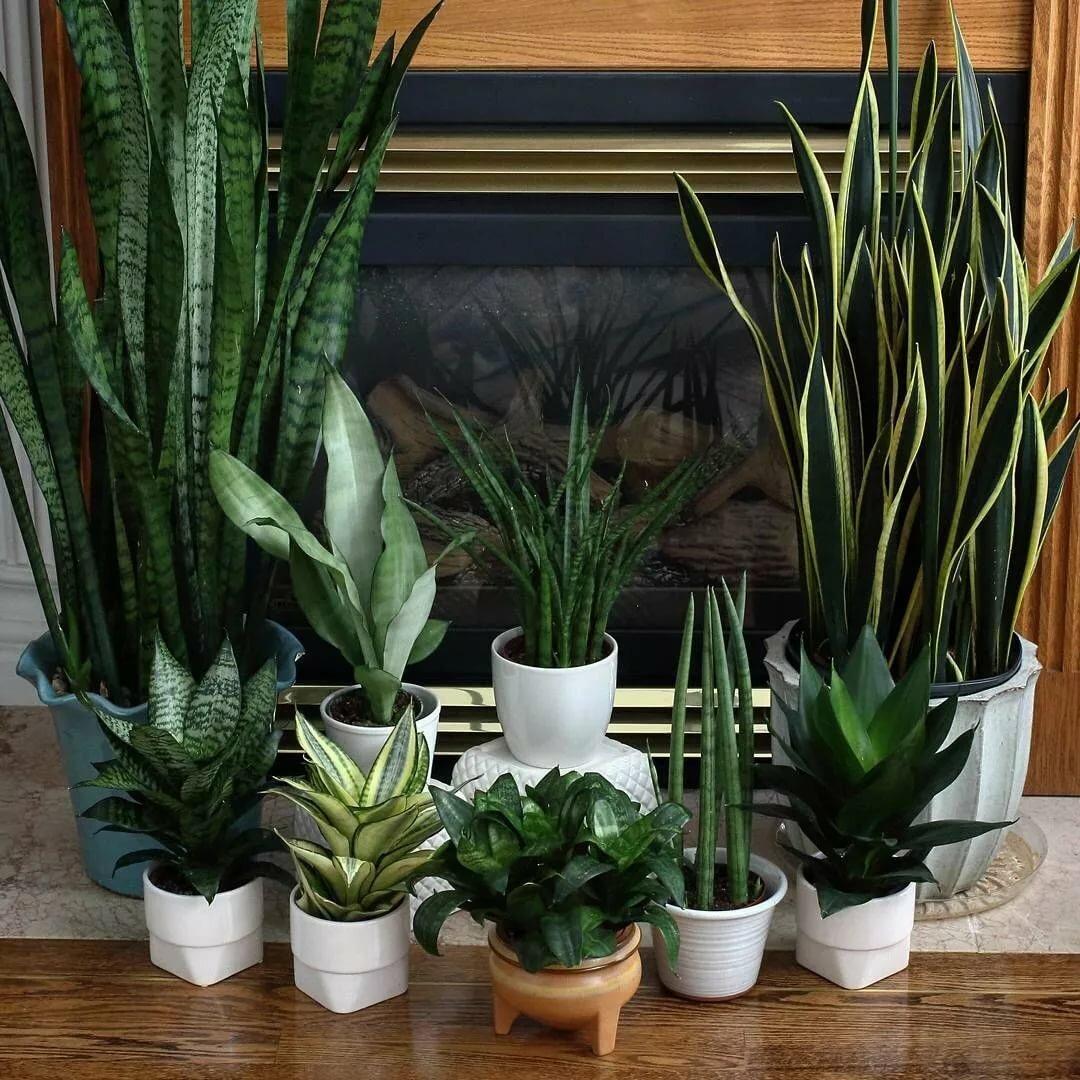 комнатные растения которые любят тень фото растёт как