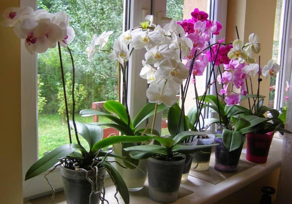 Как ухаживать за орхидеей? правила и условия содержания цветка