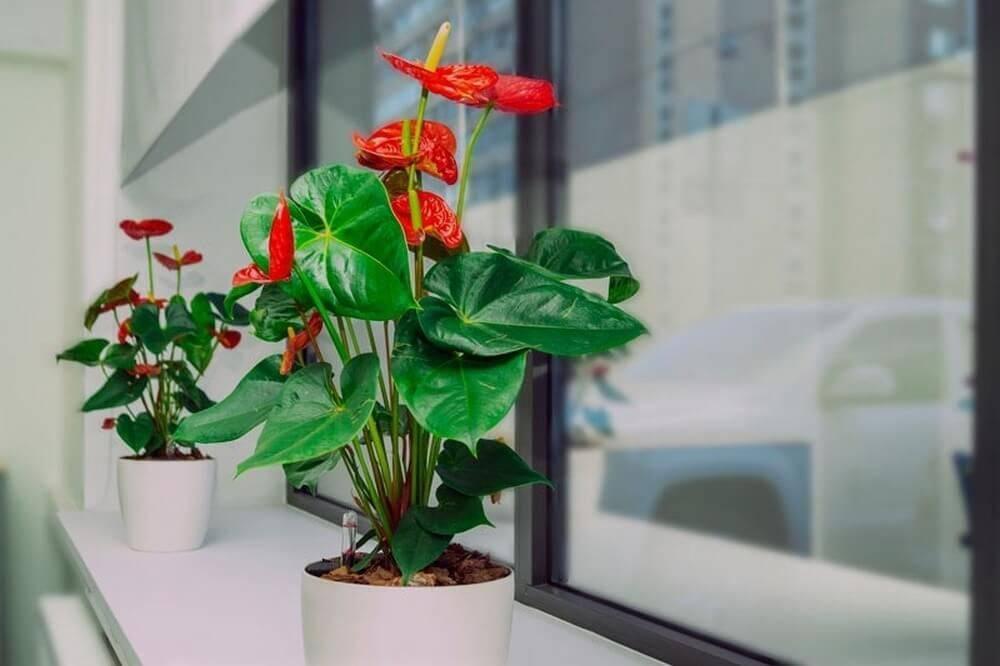 Комнатные цветы, которые любят солнце и жару