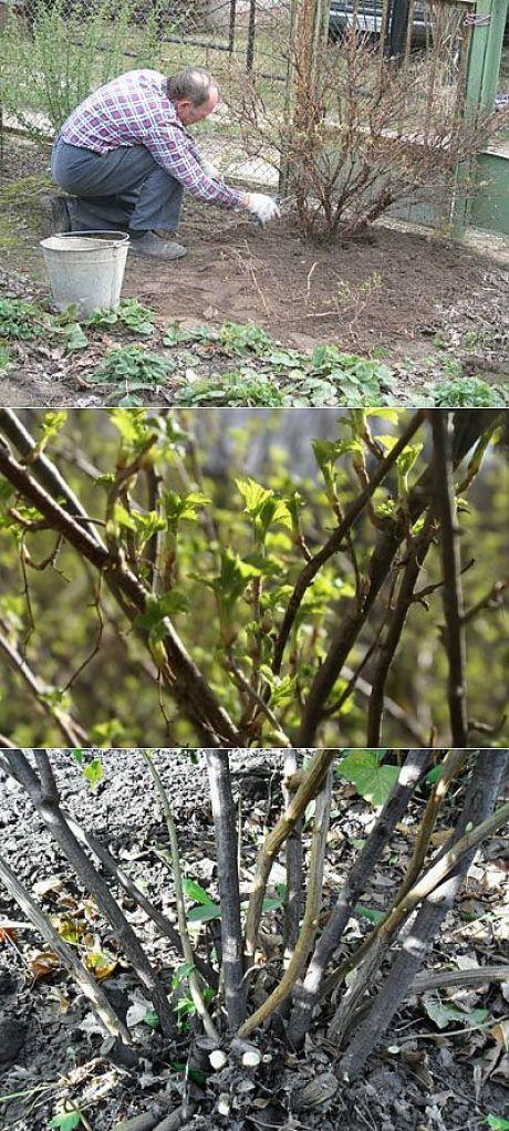 Осенний уход за садовым жасмином: обрезка и другие мероприятия