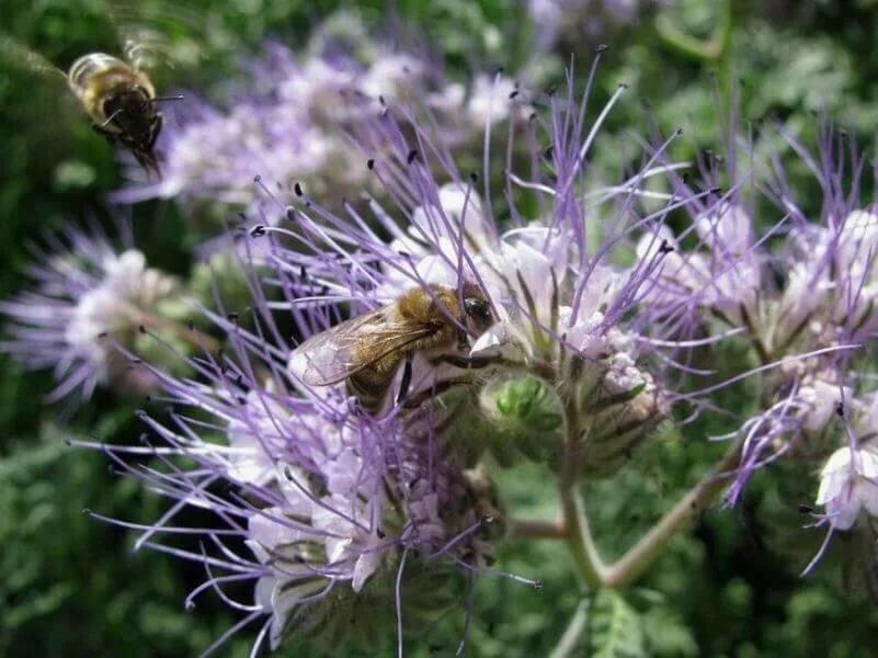 Люпины многолетние посадка и уход когда сажать люпины семенами в грунт и на рассаду