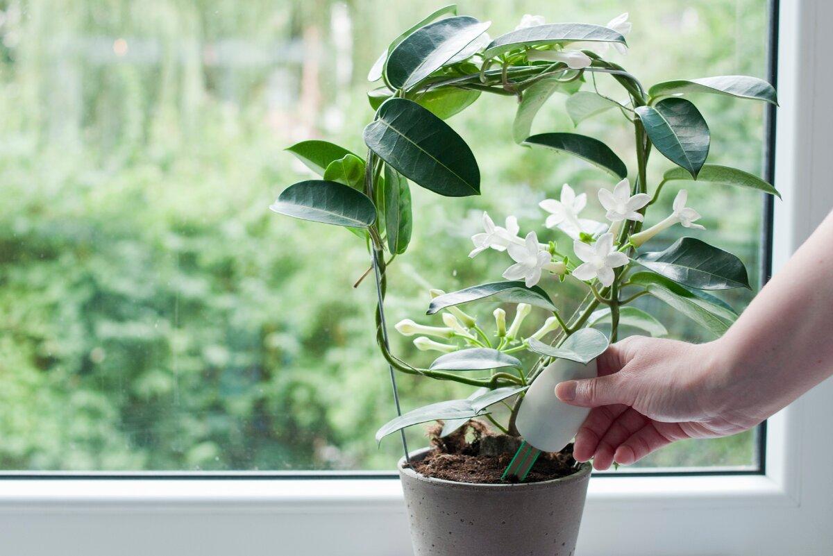 Как подкармливать комнатные растения зимой в домашних условиях