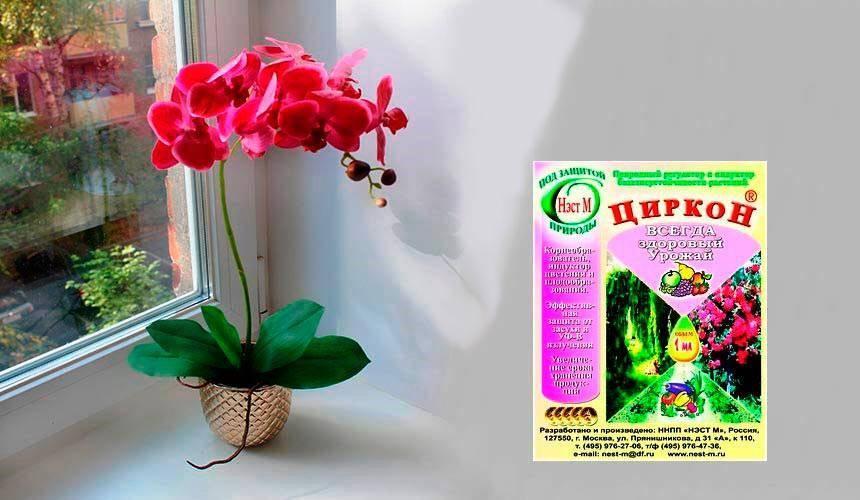 Фитоверм для орхидей: как разводить и обрабатывать?