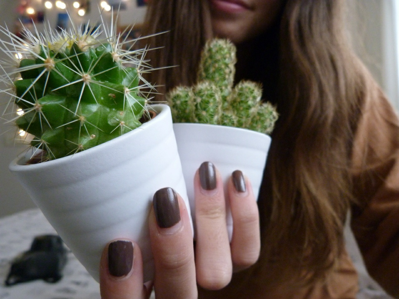 Приметы и суеверия о кактусе дома