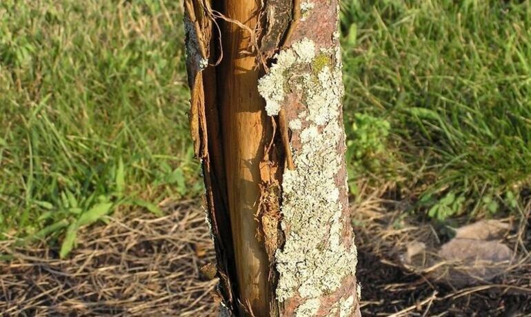 Чем можно вылечить болезни фруктовых деревьев