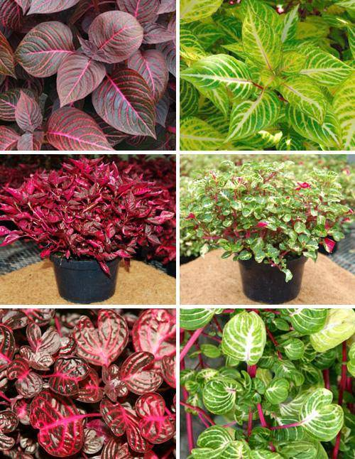 Способы формирования комнатных растений
