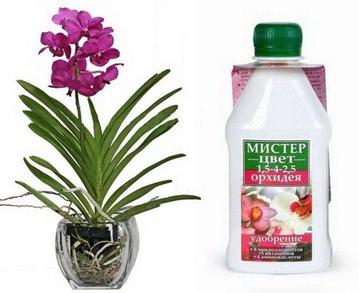 Всё о поливе орхидей чесноком и янтарной кислотой