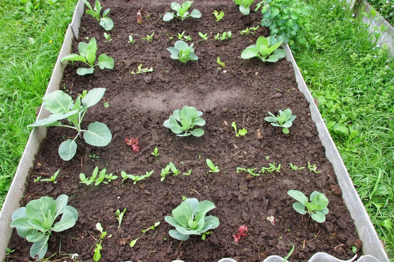 Сроки и правила посадки циннии на рассаду, уход в домашних условиях